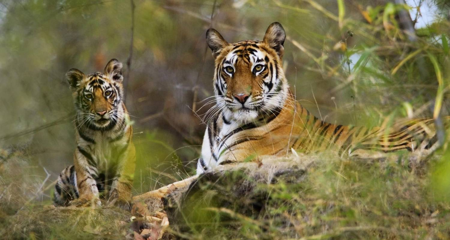 Exciting Wildlife Safari Tour in India